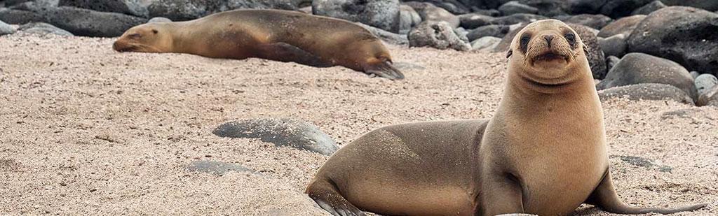 Sea lion | Galapagos cruise