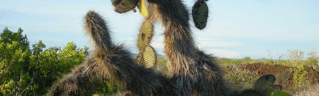 Cactus Galapagos - Galapagos Tours