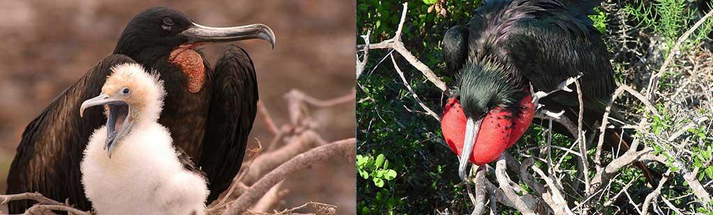 Nest - Galapagos Tours