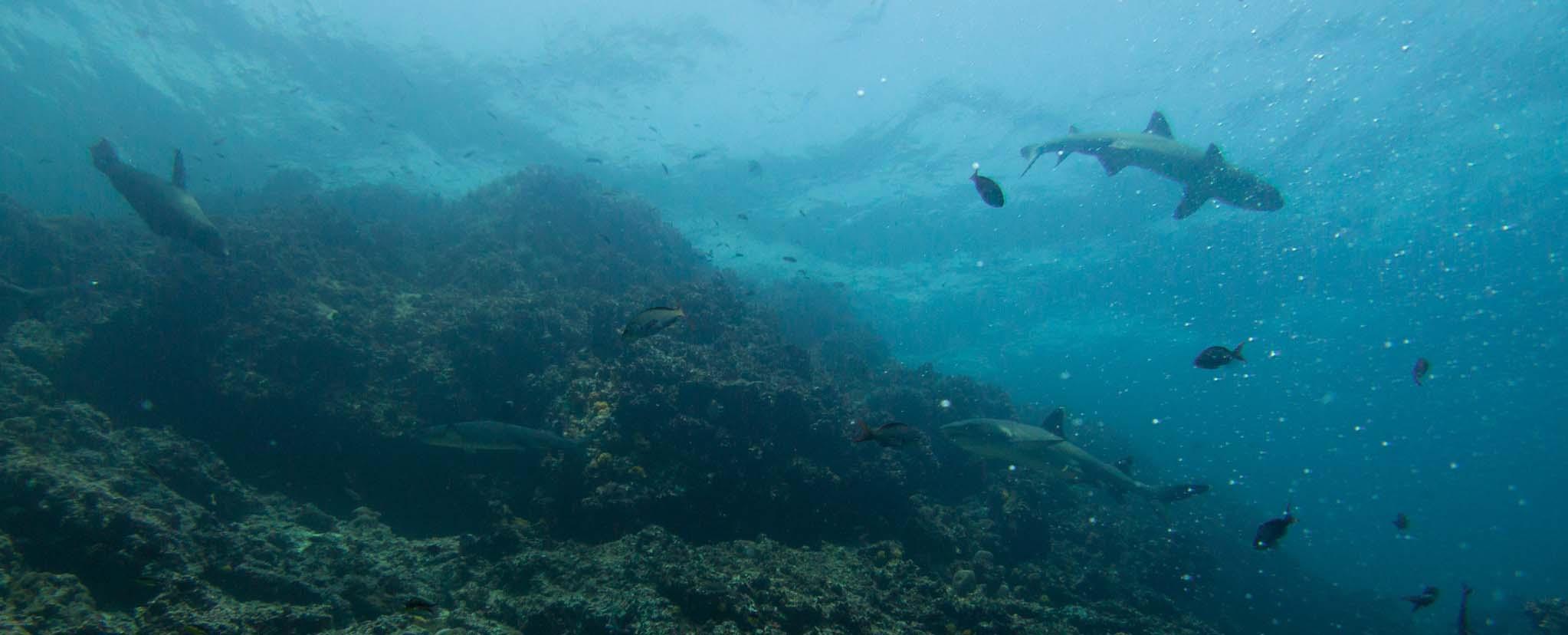 Galapagos marine wildlife